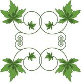 Groene bladeren op witte achtergrond. Stock Afbeelding