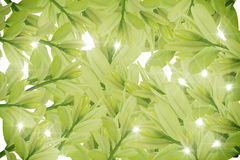 Groene bladeren op witte achtergrond, de Zomertak met verse groene bladeren, Stock Fotografie