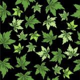 Groene bladeren op zwarte achtergrond. Naadloos. Royalty-vrije Stock Foto's