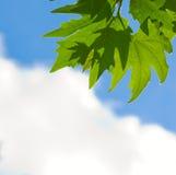 Groene bladeren over blauwe hemel royalty-vrije stock afbeelding