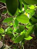Groene bladeren in stad Royalty-vrije Stock Foto