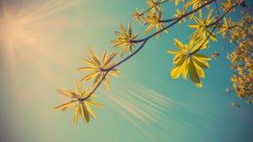 Groene bladeren tegen blauwe hemel Royalty-vrije Stock Afbeeldingen
