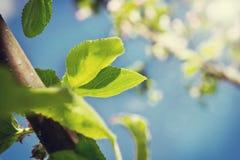 Groene bladeren tegen de hemel Royalty-vrije Stock Foto's