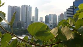 Groene bladeren tegen metropolitaanse stad Close-up groene bladeren van parkboom tegen wolkenkrabbers op zonnige dag in Bangkok stock videobeelden