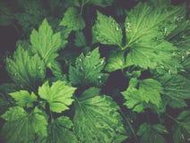 Groene bladeren tropische achtergrond stock foto's