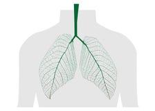 Groene bladeren van de long Royalty-vrije Stock Afbeeldingen