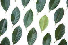 Groene bladeren van de textuurachtergrond van de jackfruitboom en banner, creatieve die lay-out van groene bladeren wordt gemaakt stock afbeelding