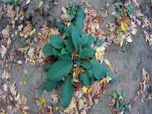 Groene bladeren van een installatie stock video