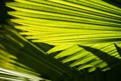 Groene bladeren van een palm royalty-vrije stock afbeeldingen