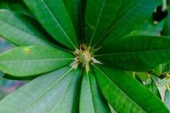 Groene bladeren van een struik die door zonlicht worden gebaad Stock Afbeeldingen