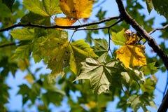 Groene bladeren van een struik die door zonlicht worden gebaad Royalty-vrije Stock Fotografie