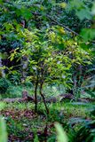 Groene bladeren van een struik die in lichte, vage backgrou wordt gebaad Royalty-vrije Stock Afbeelding