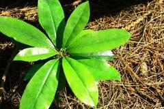 Groene bladeren van installatie Royalty-vrije Stock Foto's