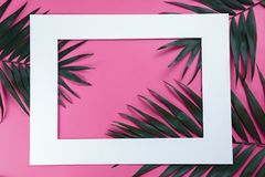 Groene bladeren van palm op helder stock fotografie