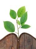Groene Bladeren van Ritssluiting Royalty-vrije Stock Foto's