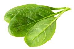 Groene bladeren van spinazie royalty-vrije stock foto