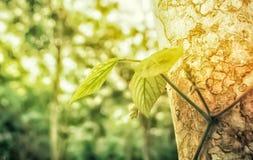 Groene bladeren van wijnstok met installatie op de bos het behangachtergrond van de de lenteaard royalty-vrije stock foto