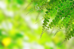 Groene bladeren voor achtergrond stock foto
