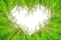 Groene bladeren voor achtergrond Royalty-vrije Stock Foto