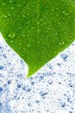 Groene bladeren in water. royalty-vrije stock afbeelding