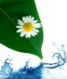 Groene bladeren in water. stock afbeelding
