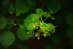 Groene bladeren, water dropletsï achtergrond ¼ Œblack royalty-vrije stock afbeelding