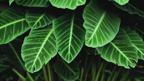 Groene bladerenaard Als achtergrond in donkere toon stock video