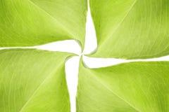 Groene bladerenachtergrond Stock Afbeelding
