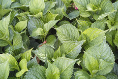 Groene bladerenachtergrond Stock Foto's