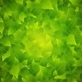 Groene bladerenachtergrond stock illustratie