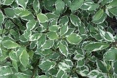 Groene bladerenachtergrond Royalty-vrije Stock Foto's