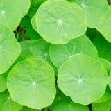 Groene bladerenachtergrond royalty-vrije stock foto