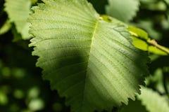 Groene bladerenachtergrond stock foto