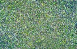 Groene bladerenachtergrond en textuur Stock Foto