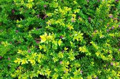 Groene bladerenachtergrond in het bos Royalty-vrije Stock Afbeeldingen