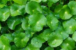 Groene bladerenachtergrond in het bos Stock Afbeeldingen