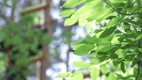 Groene bladerenachtergrond voorraad Groene bladeren van bomen in het park stock videobeelden