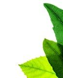 Groene bladerengrens Royalty-vrije Stock Afbeelding