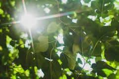 Groene bladerengrens Stock Afbeelding