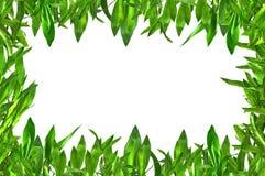 Groene bladerengrens Royalty-vrije Stock Fotografie
