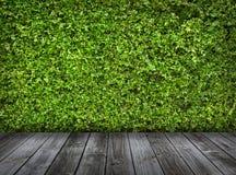 Groene bladerenmuur en oude houten vloer Stock Foto