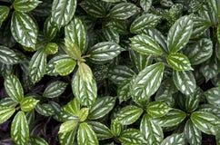 Groene bladerenpatronen Stock Foto's