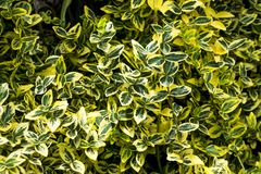Groene bladerenstruik stock foto's