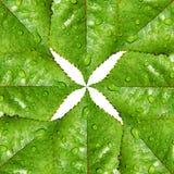Groene bladerensymmetrie en milieusymbool Royalty-vrije Stock Afbeelding