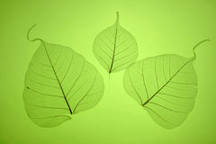 Groene bladerentextuur Royalty-vrije Stock Afbeeldingen