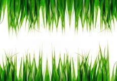 Groene bladeren geïsoleerdee achtergrond Royalty-vrije Stock Fotografie