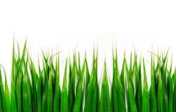 Groene bladeren geïsoleerder achtergrond Royalty-vrije Stock Foto's