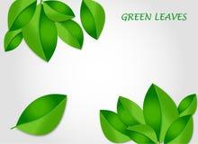 Groene bladerenvector als achtergrond Stock Fotografie