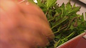 Groene bladgroente stock videobeelden