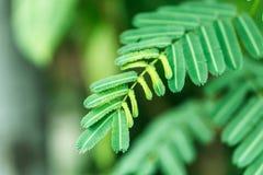 Groene bladinstallatie in tropisch land Stock Fotografie